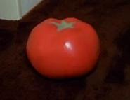 Tomato infobox