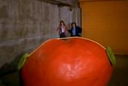 Tomato49