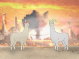 Llamas with Hats 4