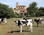 Festa Major de Llofriu 2010 Les vaques suïses de l'Antonio