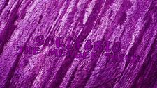 Solitario Main Title