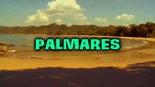 Palmares Title