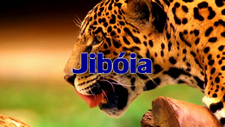 Jiboia Tribe