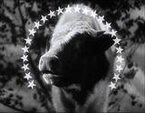 Paramount 1936 The Milky Way3 t670