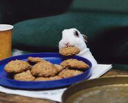 Cookie-bunny