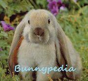 Bunnypedia