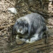 Rabbit 9966
