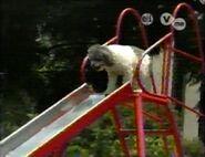 DogSlide