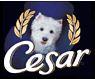 Cesarold2