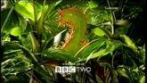 BBC2 Predator 2000