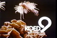 KQED9-1