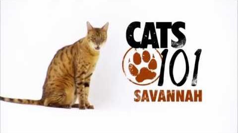 Cats 101