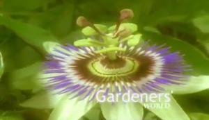 Gardeners' World 05