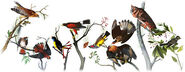 Google - 226th Birthday of John James Audubon