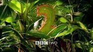 BBC2Predator