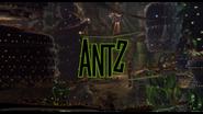 Ants title shot