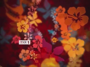 TVP1 2004-2010 (1)