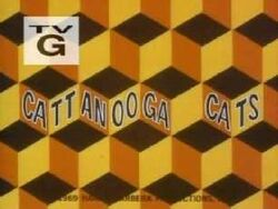 Cattacooga cats