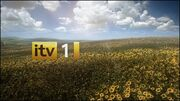 ITV1Sunflowers2010