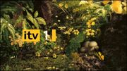 ITV1Garden2007