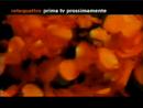 Rete 4 - petals 2 1999