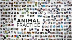 Animal Practice-title