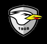 Tweed Seagulls 2019
