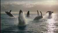 Whales4