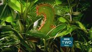 BBC2WalesPredator2015