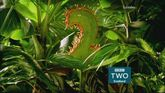 BBC2ScotlandPredator2015