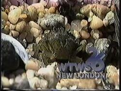 WTWS 1986 (1)