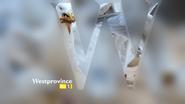 Westprovince seagulls id 2000s