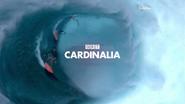 GRT Cardinalia ident 2013 (surf)