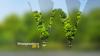 Westprovince trees id 2000s