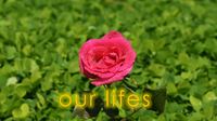 Our Lifes
