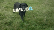 Living It ID - Dog - 2009