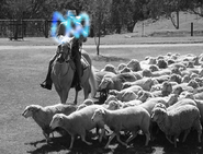 NTV ID - Sheep Station (1)