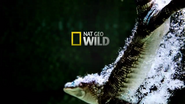 Nat Geo Wild Cheyenne ID - Gator - 2012