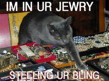 Thiefcat