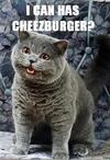Cheezburgercat