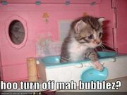 Funny-pictures-kitten-toy-bathtub