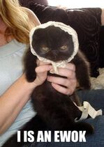 Ewokcat