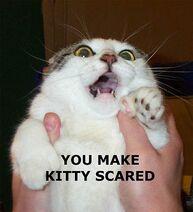 Scaredkitty