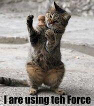 Forcecat