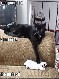Cat-summons-the-undead