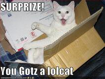 Surprise-your-box-contains-a-lolcat