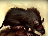Giant Field Rat