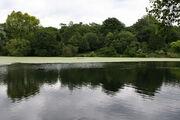 Hampstead Ponds (171329664)