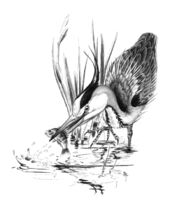 09-heron