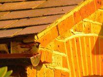 House sparrow nest site